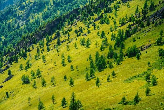 Зеленый горный пейзаж с ярко-зелеными склонами гор с хвойным лесом и скалами.