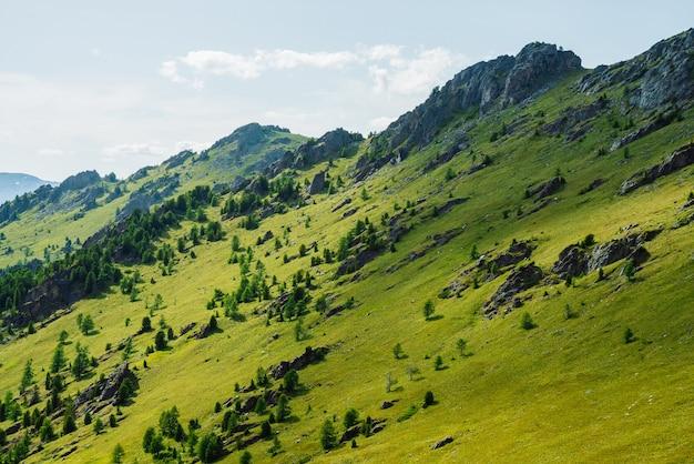 Зеленый горный пейзаж с ярко-зеленым склоном горы с хвойным лесом