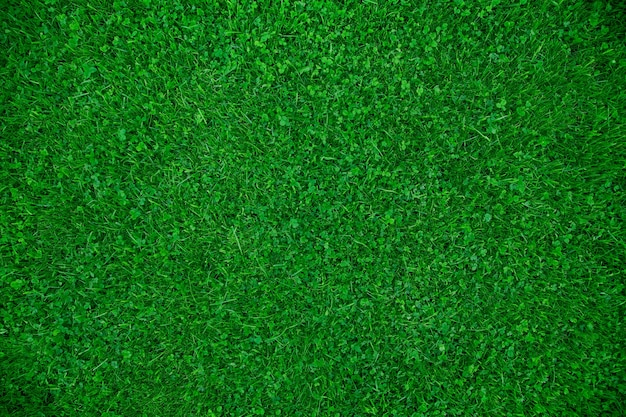 클로버 상위 뷰가 있는 녹색 잔디 잔디 블루그래스