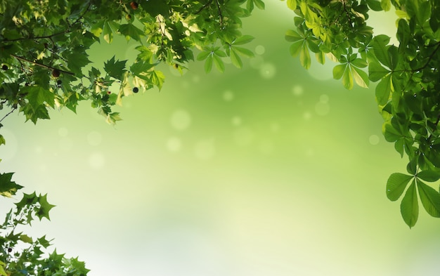Green natural background, greenery background