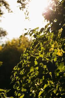 緑の自然な背景スタイリッシュな背景の概念