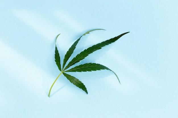 日光と緑の天然大麻葉