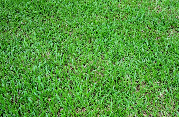 Green natural grass field
