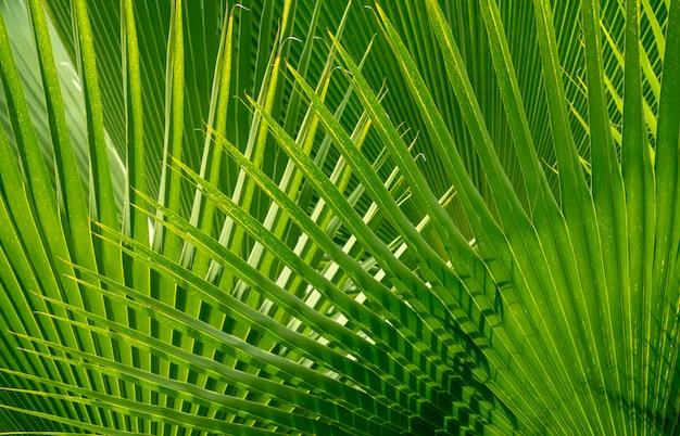 緑の自然な風合いの背景。