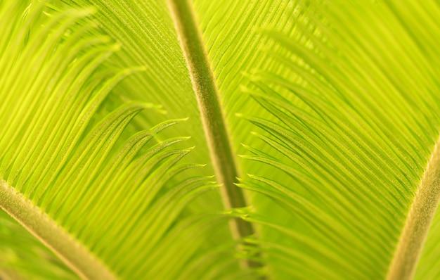 Зеленая естественная текстура фон.