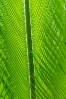 緑の自然な質感の背景。