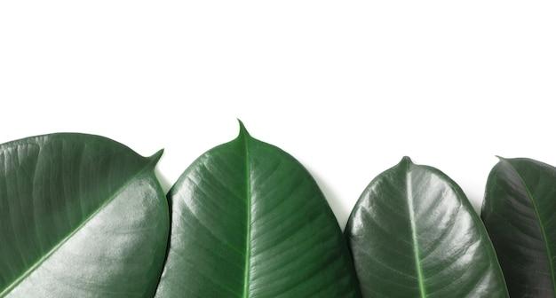 緑の自然熱帯の葉の境界線は、コピースペースと白い背景で隔離。ジャングルのエキゾチックな葉のテンプレート。自然のレイアウト、上面図