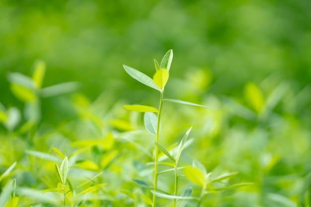 緑の自然の背景、緑の葉のテクスチャ背景のクローズアップ。