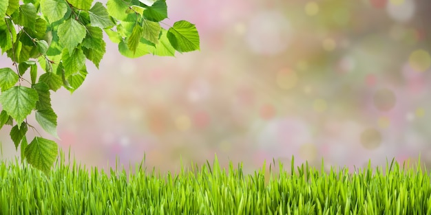 Green nature background with leaves on branch
