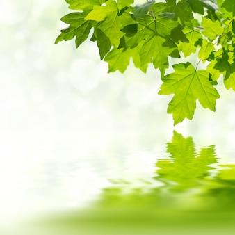물에 분기 반사에 잎 녹색 자연 배경
