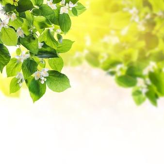 Зеленая природа фон с листьями