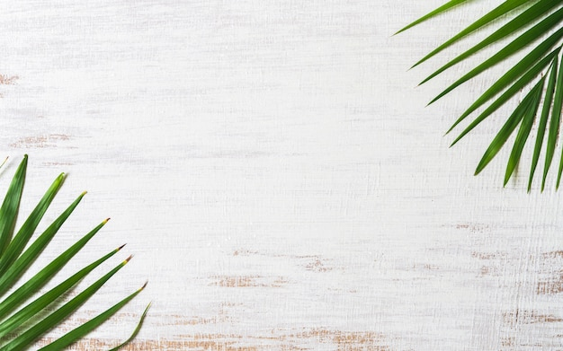 Green nature tropical palm leaves on grunge white wood background.