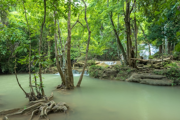 Зеленая природа с зеленым водопадом