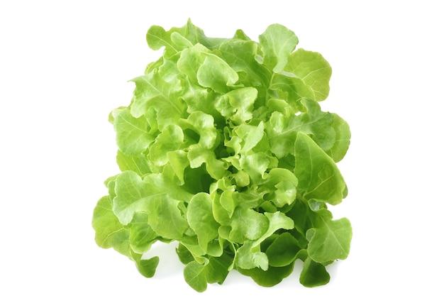 Салат зеленый дуб, изолированные на белом фоне