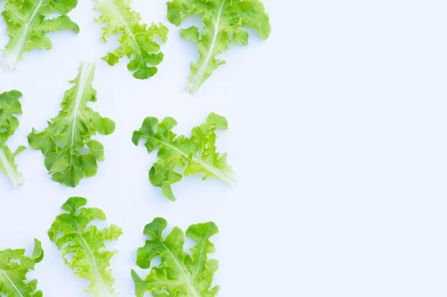 グリーンオークレタスは白い表面に残します。上面図