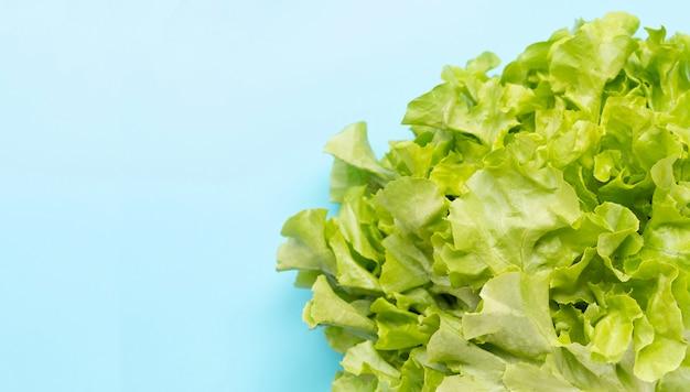 Салат зеленого дуба на голубой предпосылке.