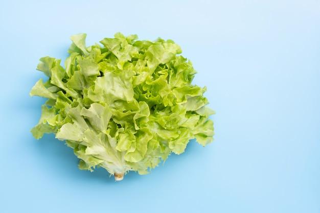 Зеленый дубовый салат на синем