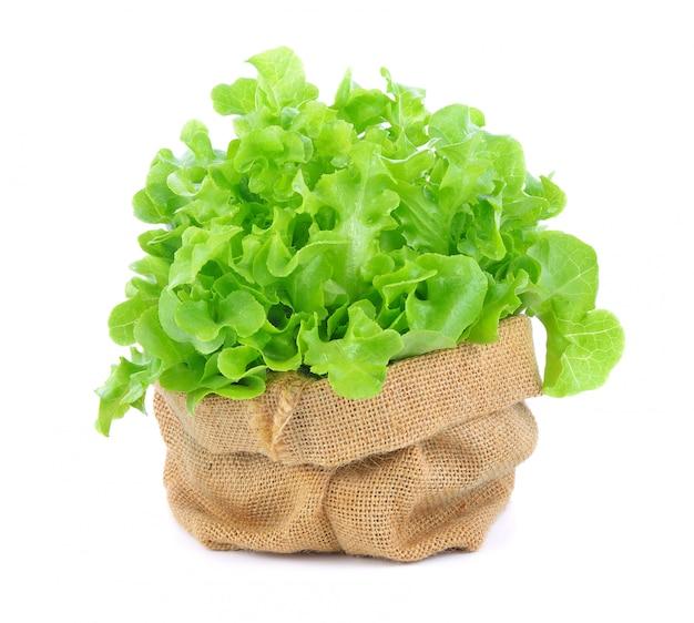 Зеленый дубовый салат на белом фоне