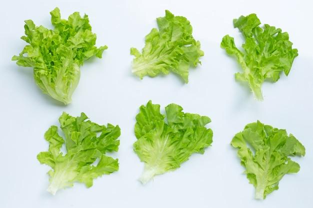 Зеленый дубовый салат на белом