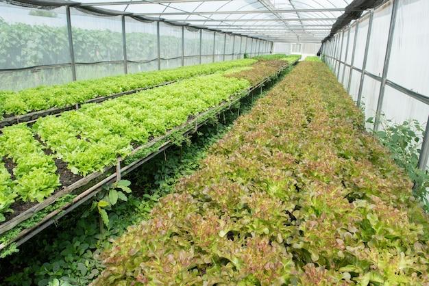 Green oak and red oak in vegetable garden