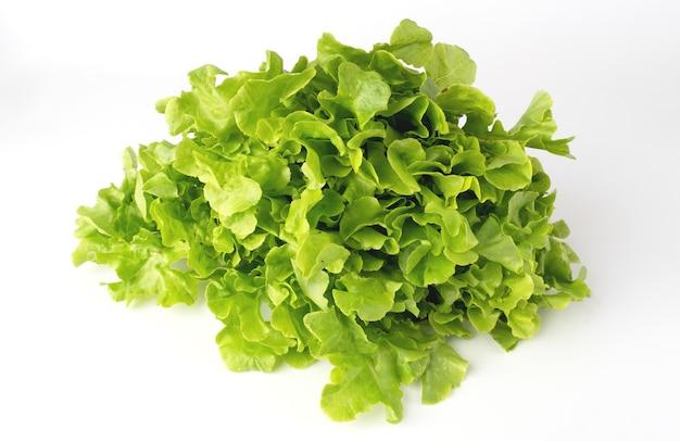 白い背景の上のグリーンオークサラダ。
