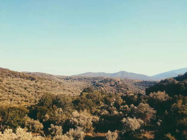 Зеленые оливковые деревья на горах во время солнечного дня с голубым небом. естественный горный пейзаж в греции. расширенная территория оливковых плантаций на горном ландшафте.