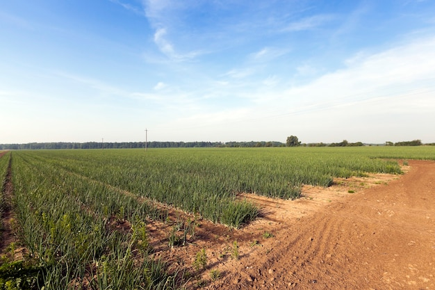 농업 분야에서 파 콩나물