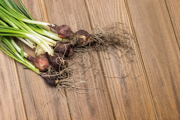 Green onions with roots and soil. wooden background.