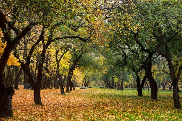 Green and orange leaves in autumn forest.