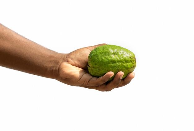 흰색 배경에 고립 된 남성 손에 녹색 유기농 구아바 과일