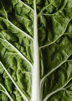 Verdura biologica verde per insalata