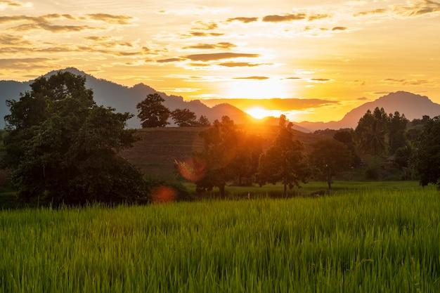日没時とタイの田舎の木々や山々のある緑の水田。