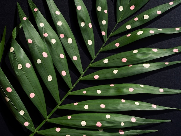 Green painted tropical fern leaves on black background