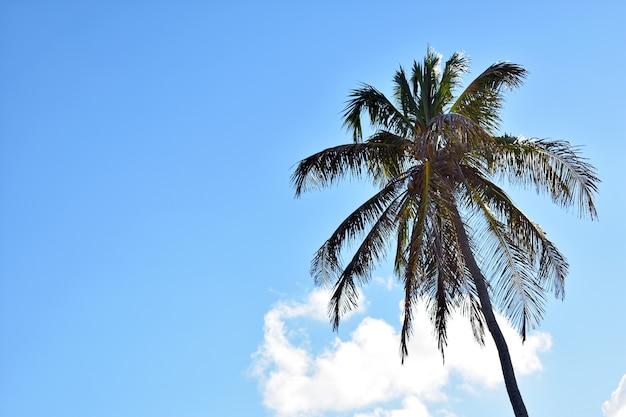 Зеленая пальма на фоне голубого неба