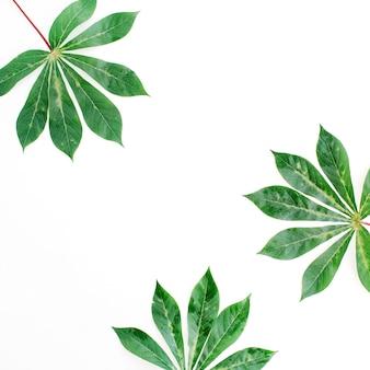 흰색 바탕에 녹색 종 려 가지 프레임입니다.