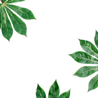 白い背景の上の緑のヤシの枝のフレーム。