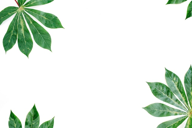 Green palm branches frame on white background.