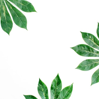 Green palm branches frame on white