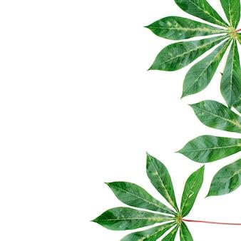 白い背景の上の緑のヤシの枝。