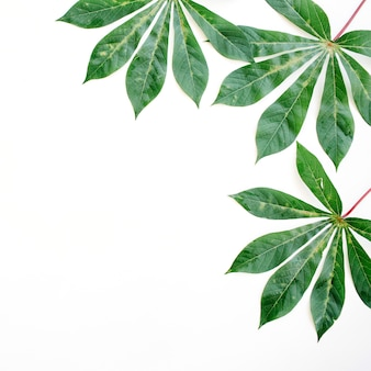 Green palm branches on white