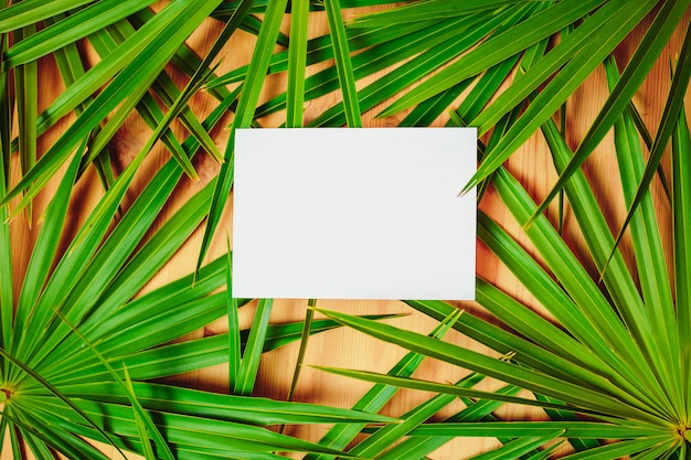 Green palm branches on the wooden table. ecological card with palm leaves and white paper on the center for text.
