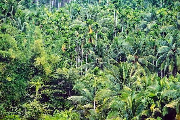 Фон зеленый пальмовых листьев. зеленый фон пальм. непроходимые тропические джунгли.