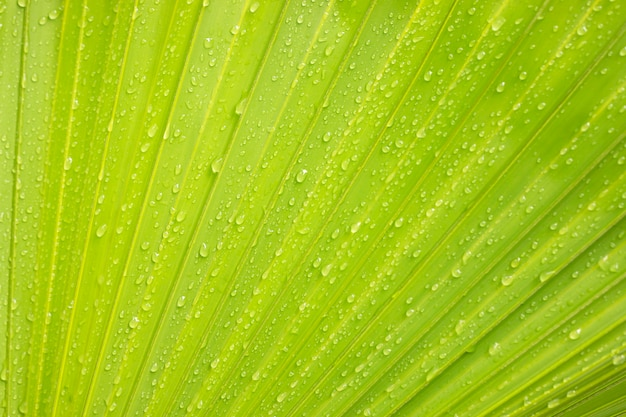 Green palm leaf background with water droplets