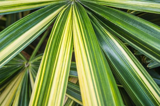 緑のヤシの葉の背景