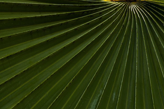 Green palm leaf close-uo background