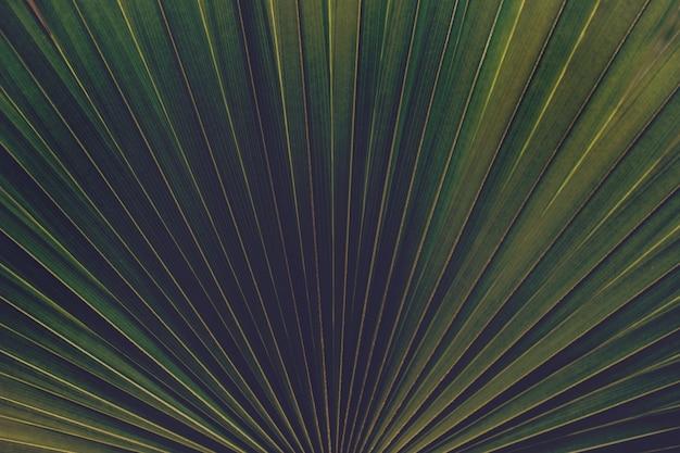 Green palm leaf closeup