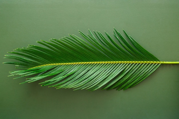 緑のヤシの葉は、緑の革のテクスチャの背景にあります。最小限のスタイルのモノクロのヤシの葉。肌と熱帯植物のヤシの質感。上面図。