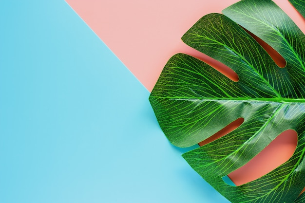 Green palm leaf on pink and blue color background