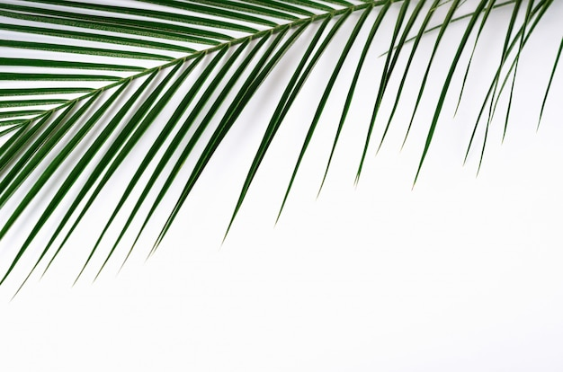 Green palm leaf and shadow on white