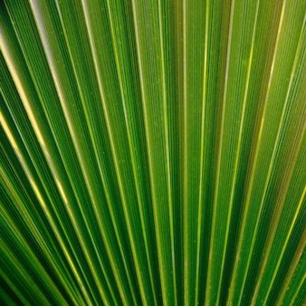Green palm leaf texture.
